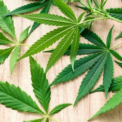 How much do you know about marijuana?